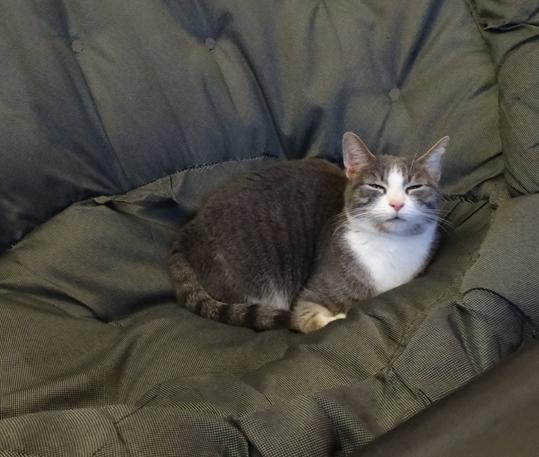 j ' adore mon chat !!! Flatou10