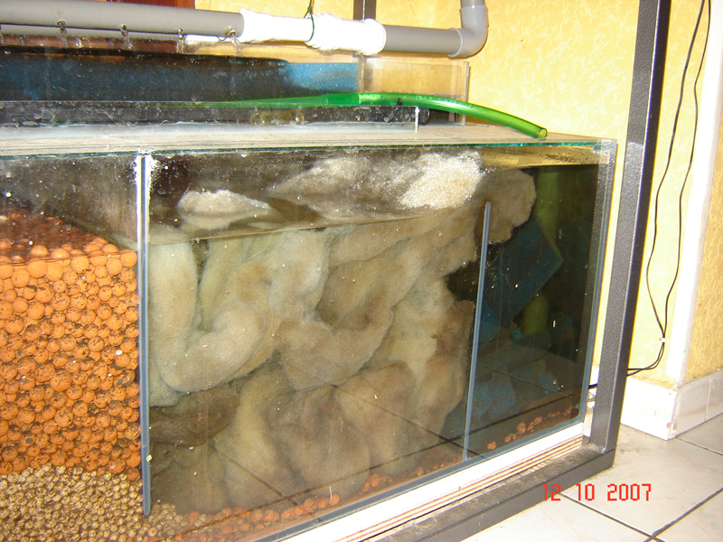Concernant la taille de l'aquarium et  notre méthode Perlon11