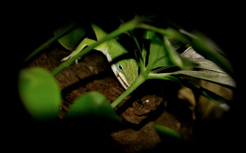 Le terrarium semi-humide /Humide Captur12