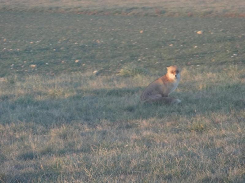 "Un ""Fox"" à Lyon Bron Dsc02210"