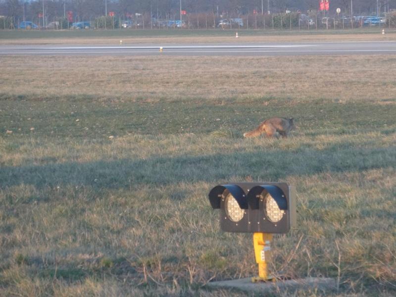 "Un ""Fox"" à Lyon Bron Dsc02211"