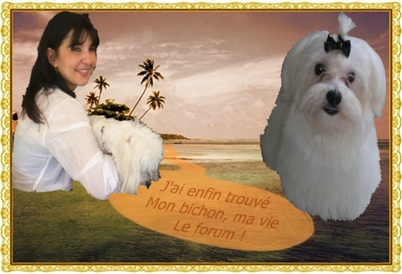Album photos des bichons - Page 7 A41010