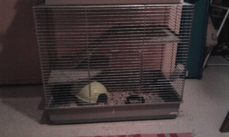 Cage Photo010