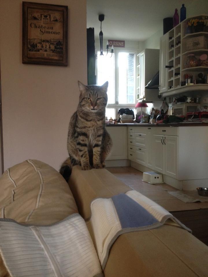 Chamallow, adorable chaton tigré ronronneur - réservé Cham_a12