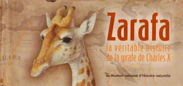 ZARAFA - La girafe de Charles X, dite Zarafa Img110