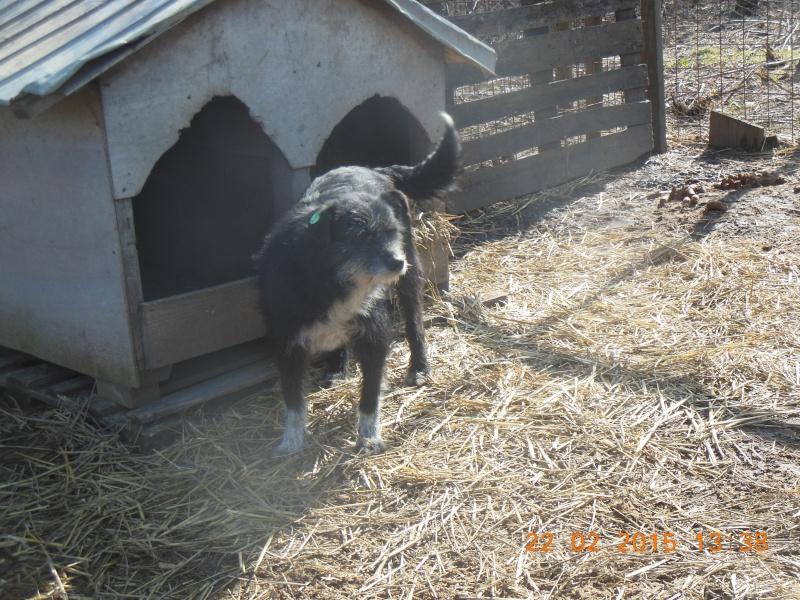 NOYA, née en 2010, En FA dans le 94 - type griffon - Parrainée par Yemtsi-R-SOS-FB-LBC-SC-AS-30MA - Page 2 Pictu134