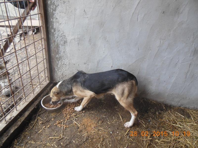 TOSKA, femelle noire et feu née en 2008 - sauvée de l'équarrissage - Parrainée par Zoé 94 -R- SOS-SC - Page 2 Pictu211