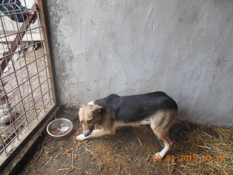 TOSKA, femelle noire et feu née en 2008 - sauvée de l'équarrissage - Parrainée par Zoé 94 -R- SOS-SC - Page 2 Pictu212