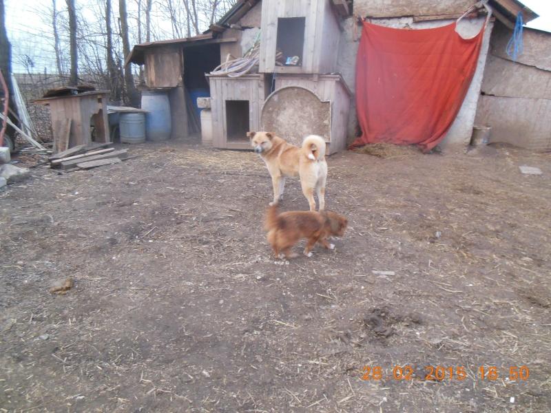 martha - MARTHA - croisée berger née en 2013 - au refuge depuis 2014, sauvée de l'équarrissage - parrainée par caroline78 - SOS-R-SC- - Page 2 Pictu233