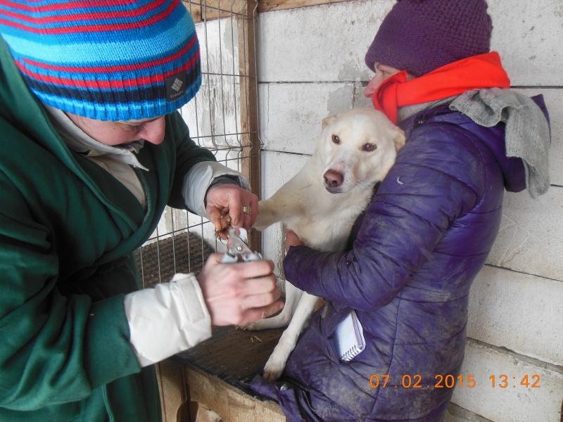 ALBISHOR / WHITE - MÂLE de couleur BLANCHE - né en 2009 - Lenuta, parrainé par Armance et Epinette -  R-VV-LBC-SC- SOS - Page 2 Pictur21