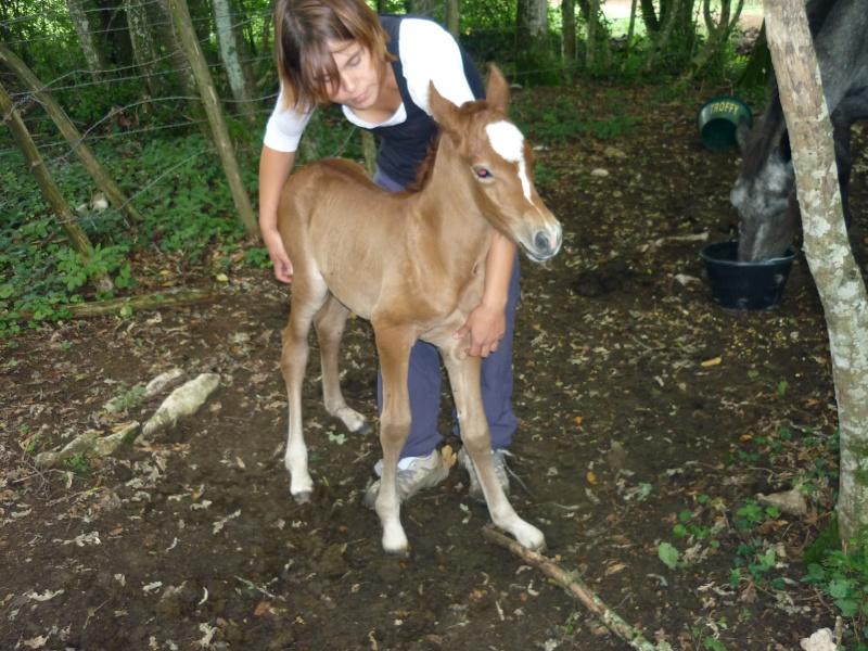 NINA - ONC selle typée Camargue née en 2002, et sa fille ALOE (2010) - adoptées en août 2010 par nine68 - Page 5 P1020210
