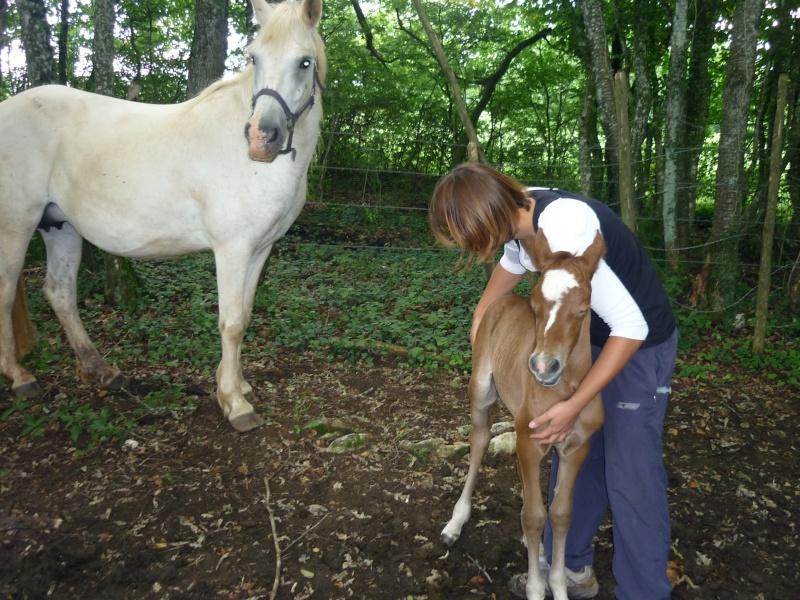 NINA - ONC selle typée Camargue née en 2002, et sa fille ALOE (2010) - adoptées en août 2010 par nine68 - Page 5 P1020211