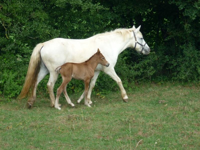NINA - ONC selle typée Camargue née en 2002, et sa fille ALOE (2010) - adoptées en août 2010 par nine68 - Page 5 P1020212