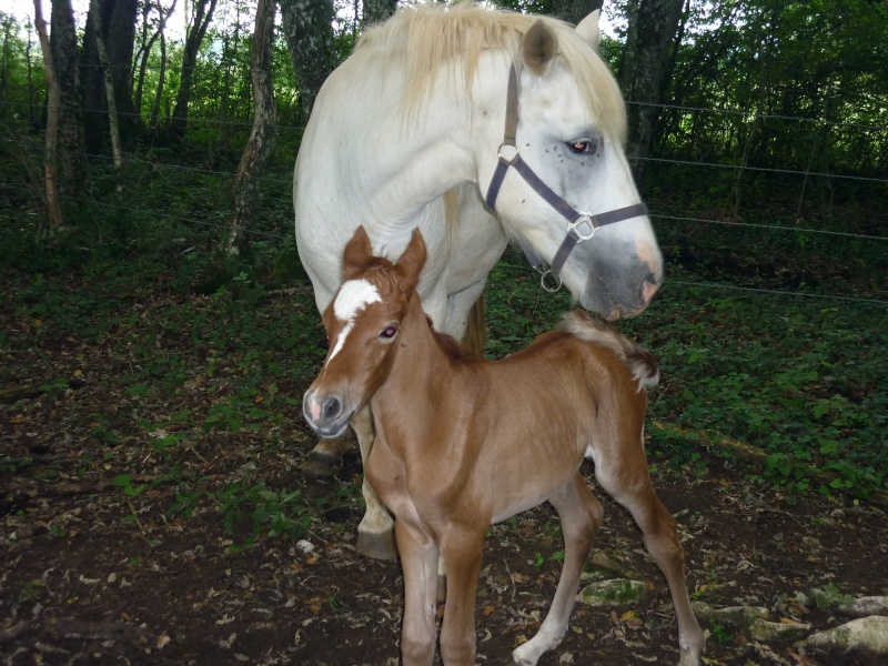 NINA - ONC selle typée Camargue née en 2002, et sa fille ALOE (2010) - adoptées en août 2010 par nine68 - Page 6 P1020214