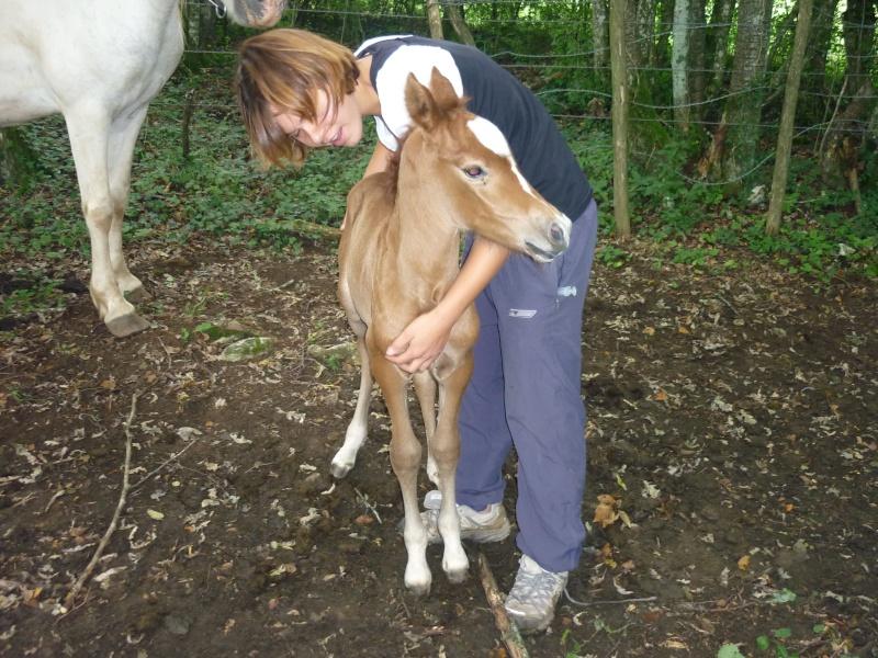 NINA - ONC selle typée Camargue née en 2002, et sa fille ALOE (2010) - adoptées en août 2010 par nine68 - Page 6 P1020215
