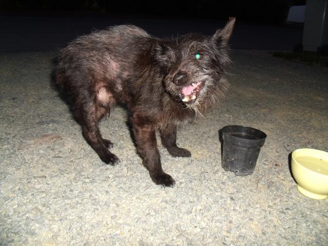 Roméo, type ratier, male, très agé (adopté) 66580410