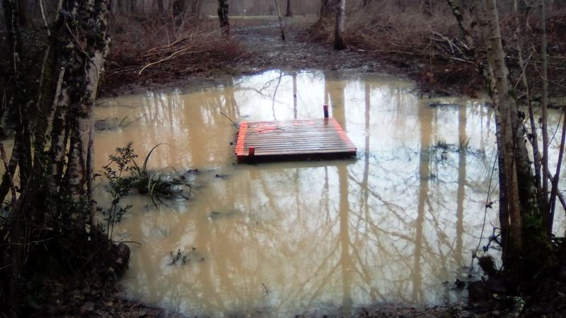 Lac inondé  Img_2021