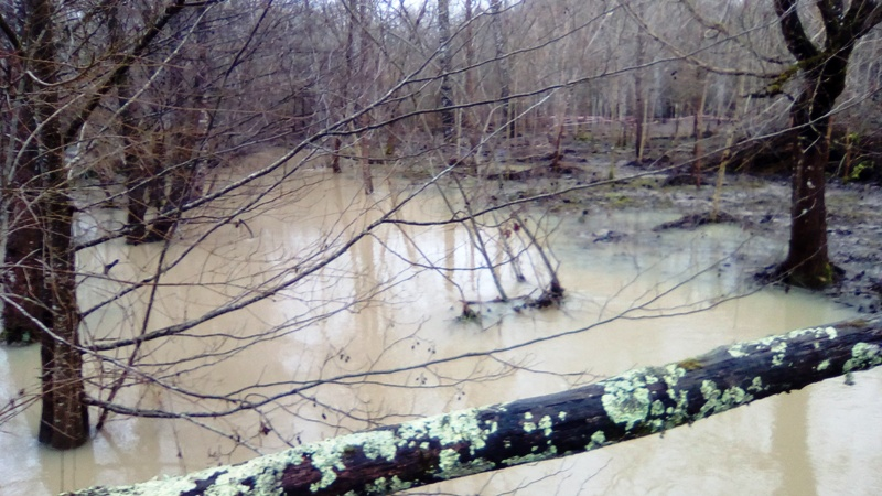 Lac inondé  Img_2022