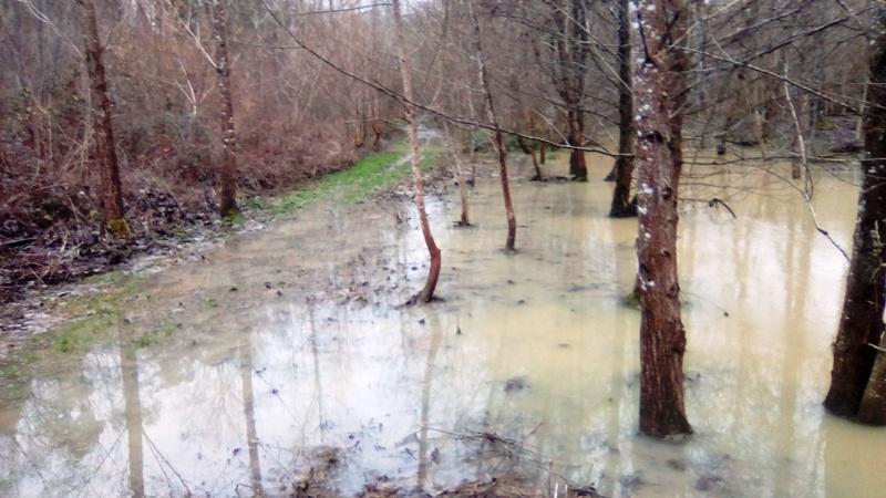 Lac inondé  Img_2023