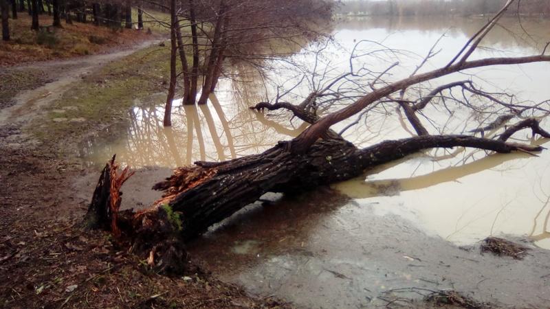 Lac inondé  Img_2030