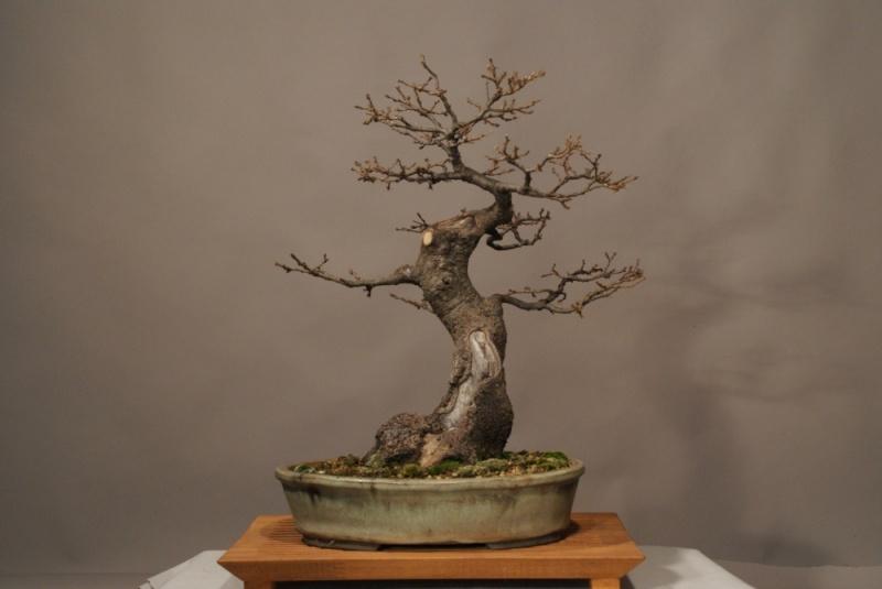 Oak from 2006 0215_210