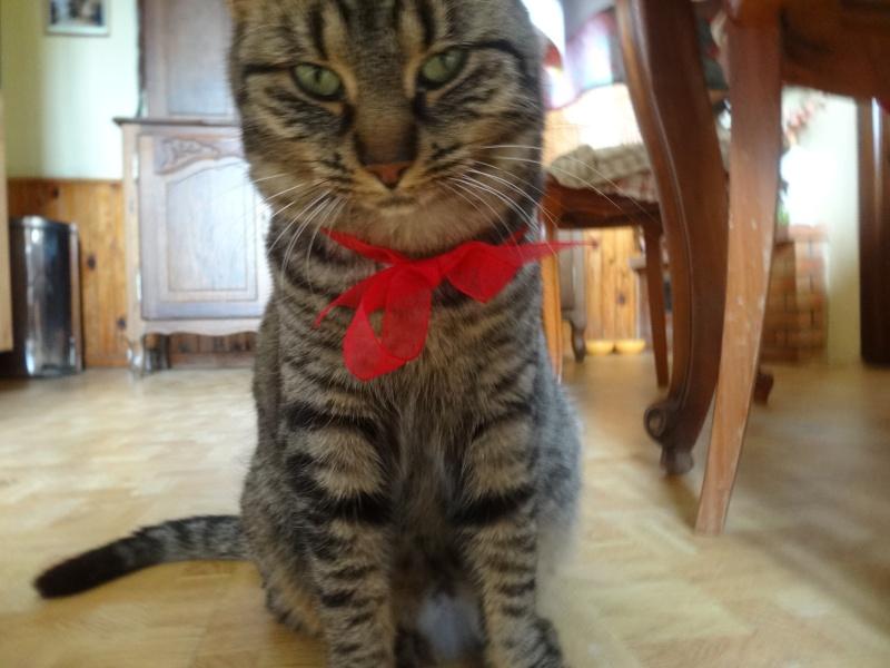 IRMA chaton femelle 10/06/2013 adoptée par jennifer  ( 85 ) Dsc00710