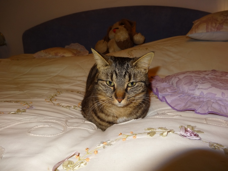 IRMA chaton femelle 10/06/2013 adoptée par jennifer  ( 85 ) Dsc01410
