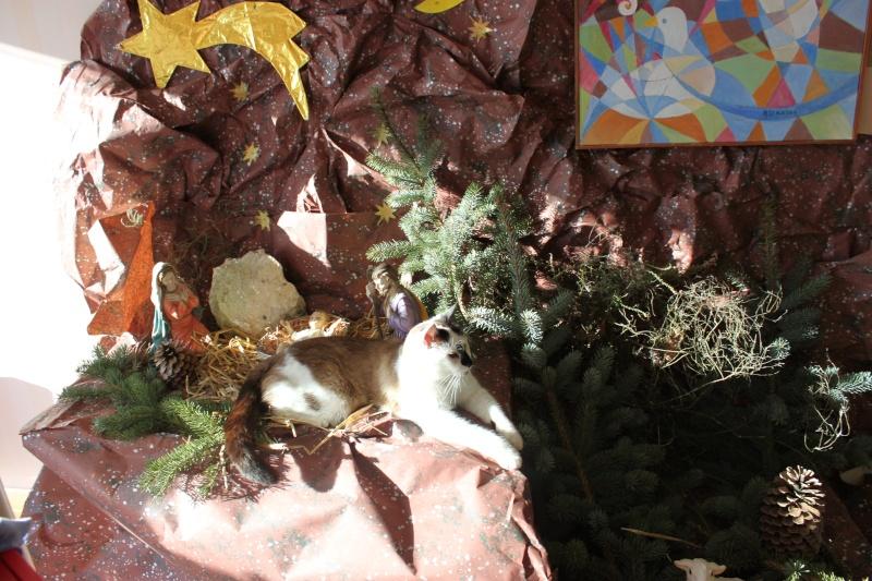 FELIX  CHat male en fourrière né  29/09/2004  adopté par LA CHATAIGNERAIE (37) Img_4910