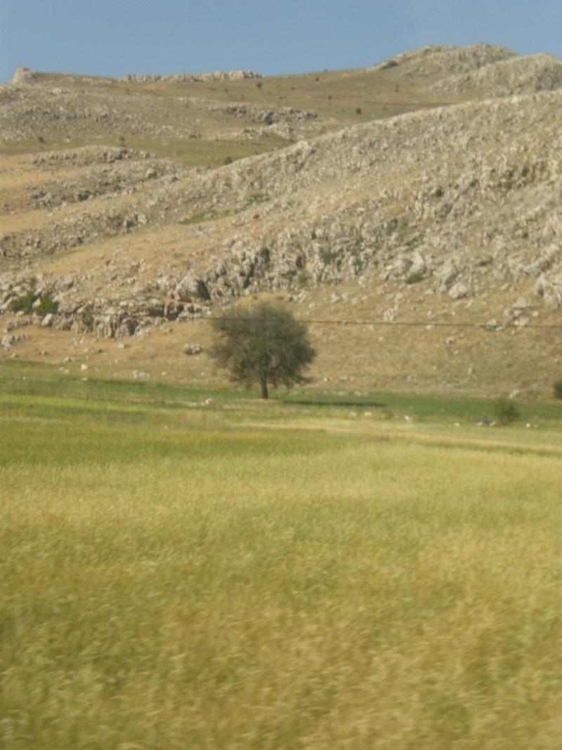 Анталия. Турция - Страница 2 P6270118