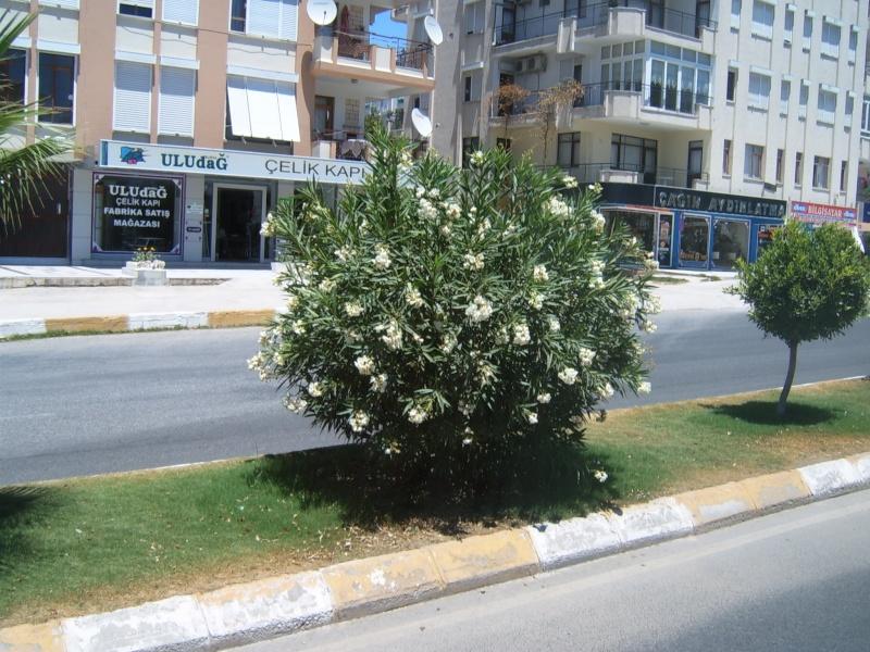 Анталия. Турция S3700425