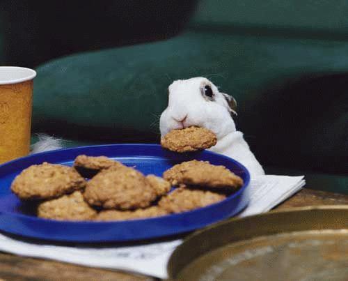 Funny animals Cute-a10