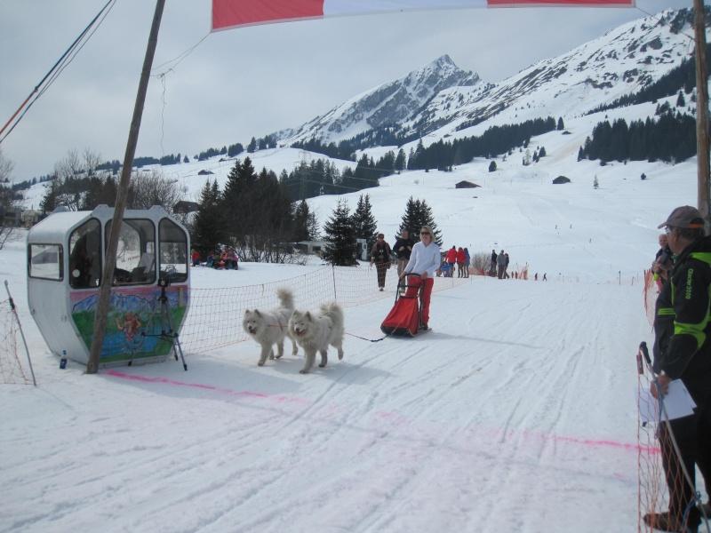 Course internationale de traîneaux à Chiens - Les Mosses - Suisse 2713