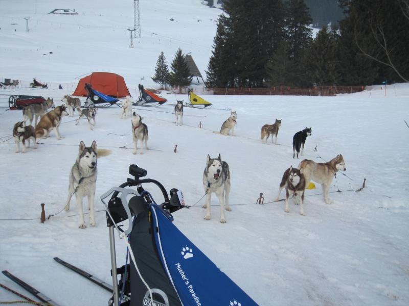Course internationale de traîneaux à Chiens - Les Mosses - Suisse 346