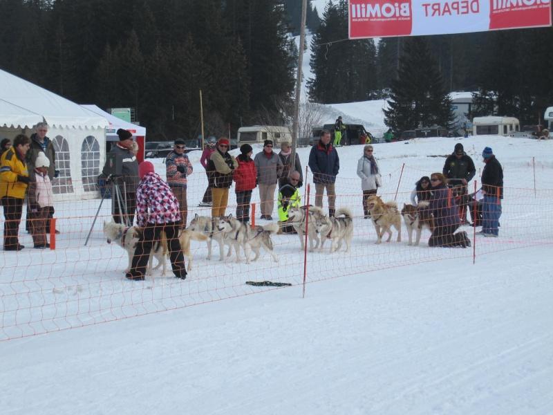 Course internationale de traîneaux à Chiens - Les Mosses - Suisse 5_deux10