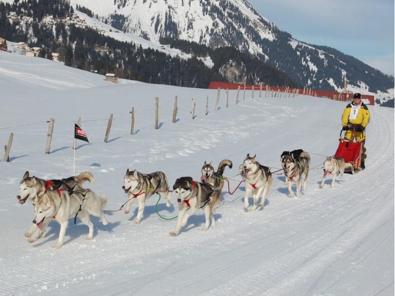 Course internationale de traîneaux à Chiens - Les Mosses - Suisse Image_10