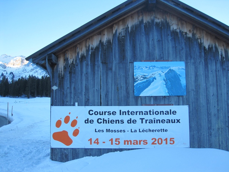 Course internationale de traîneaux à Chiens - Les Mosses - Suisse Img_8311
