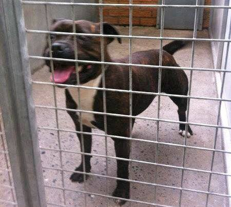 Suki has been saved today on 11th hour now in S&S boarding  SAFE has rescue Suki10