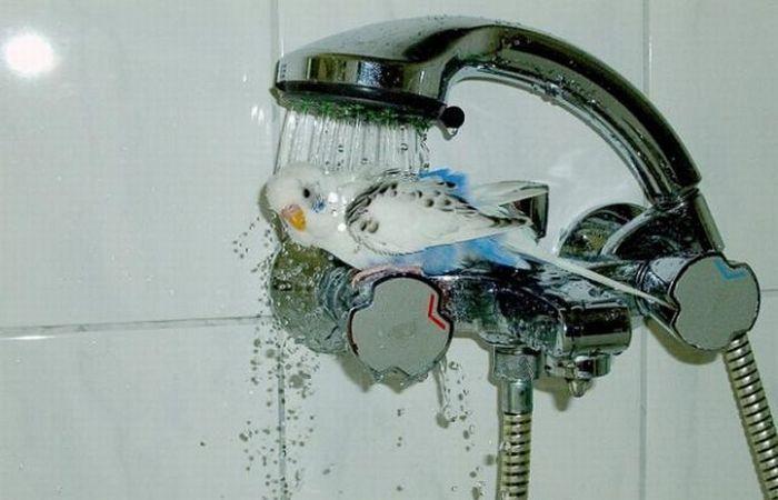 Une façon Originale de prendre sa douche  11082210