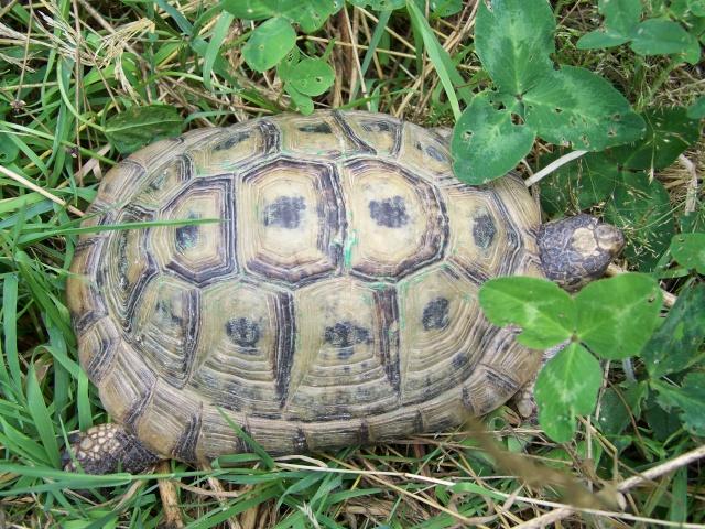 Identification de ma petite Fiona 03-07-24
