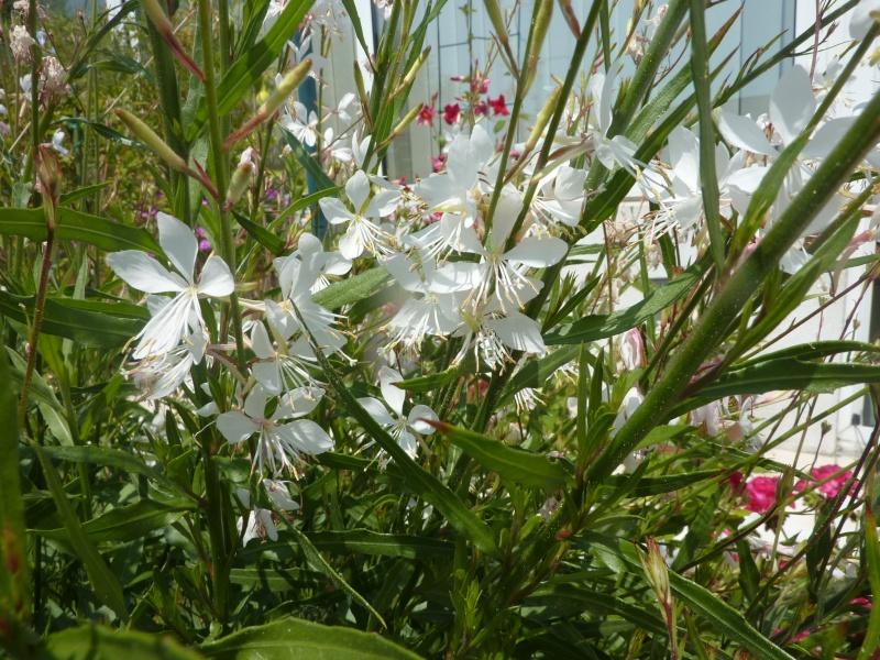 jardin du sud P1020416