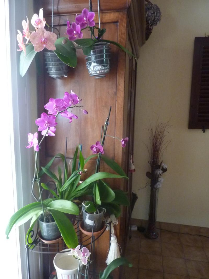 Phalaenopsis - Page 2 P1020710
