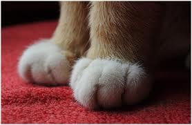 Miau... - Seite 3 Images20