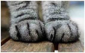 Miau... - Seite 3 Images21