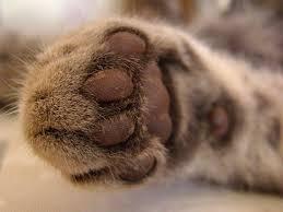 Miau... - Seite 3 Images22