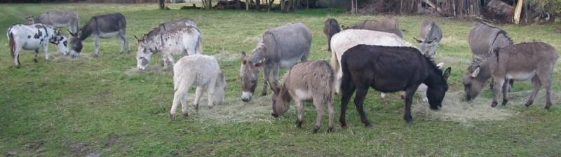 cheval - différence âne/cheval Troupe10