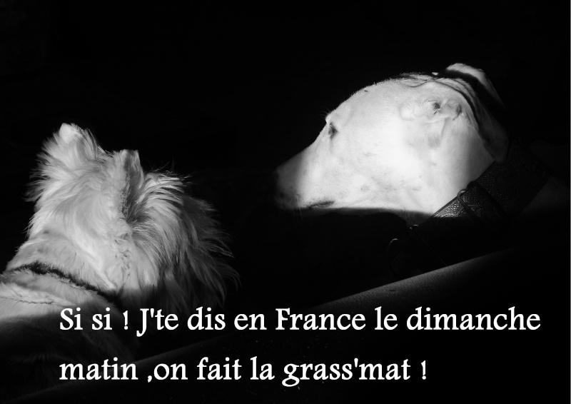 """Suspiro né en 2008  """"Scooby France""""  Adopté  - Page 3 Suspir11"""