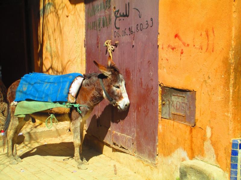 Maroc - Page 2 Meknes10