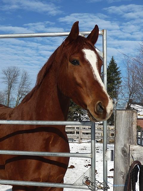 Mes amis les chevaux 14-12-10