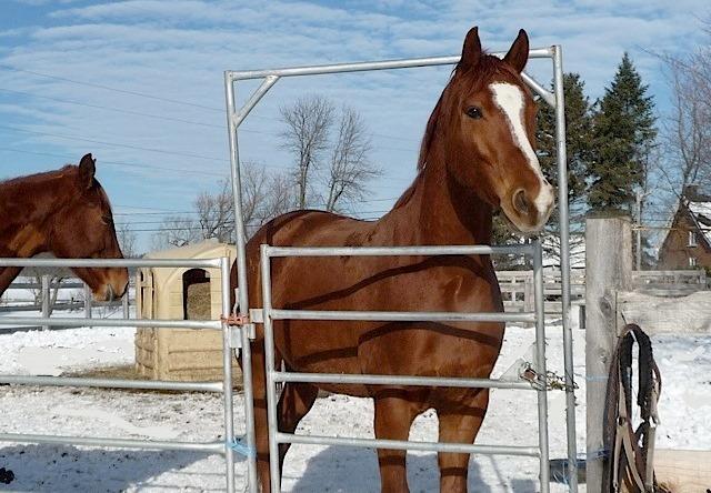 Mes amis les chevaux 14-12-11