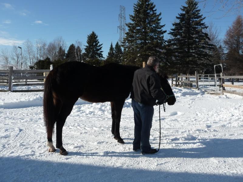 Mes amis les chevaux P1090510